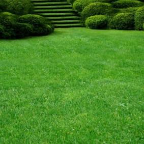 искусственный газон для дачи идеи оформление