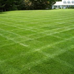 искусственный газон для дачи обзор