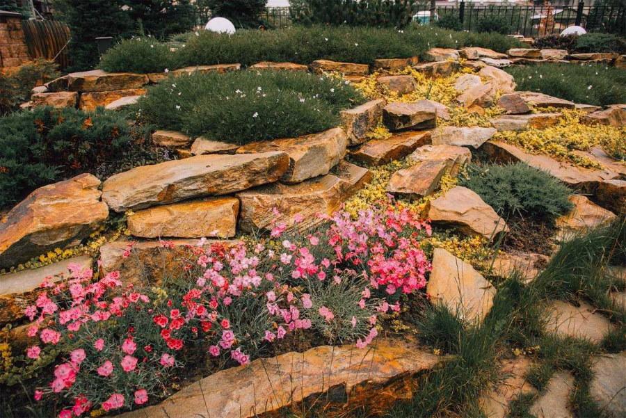 Полевые цветы между камнями на альпийской горке