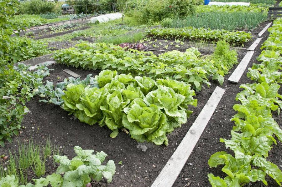 Удобные грядки на правильно спланированном огороде