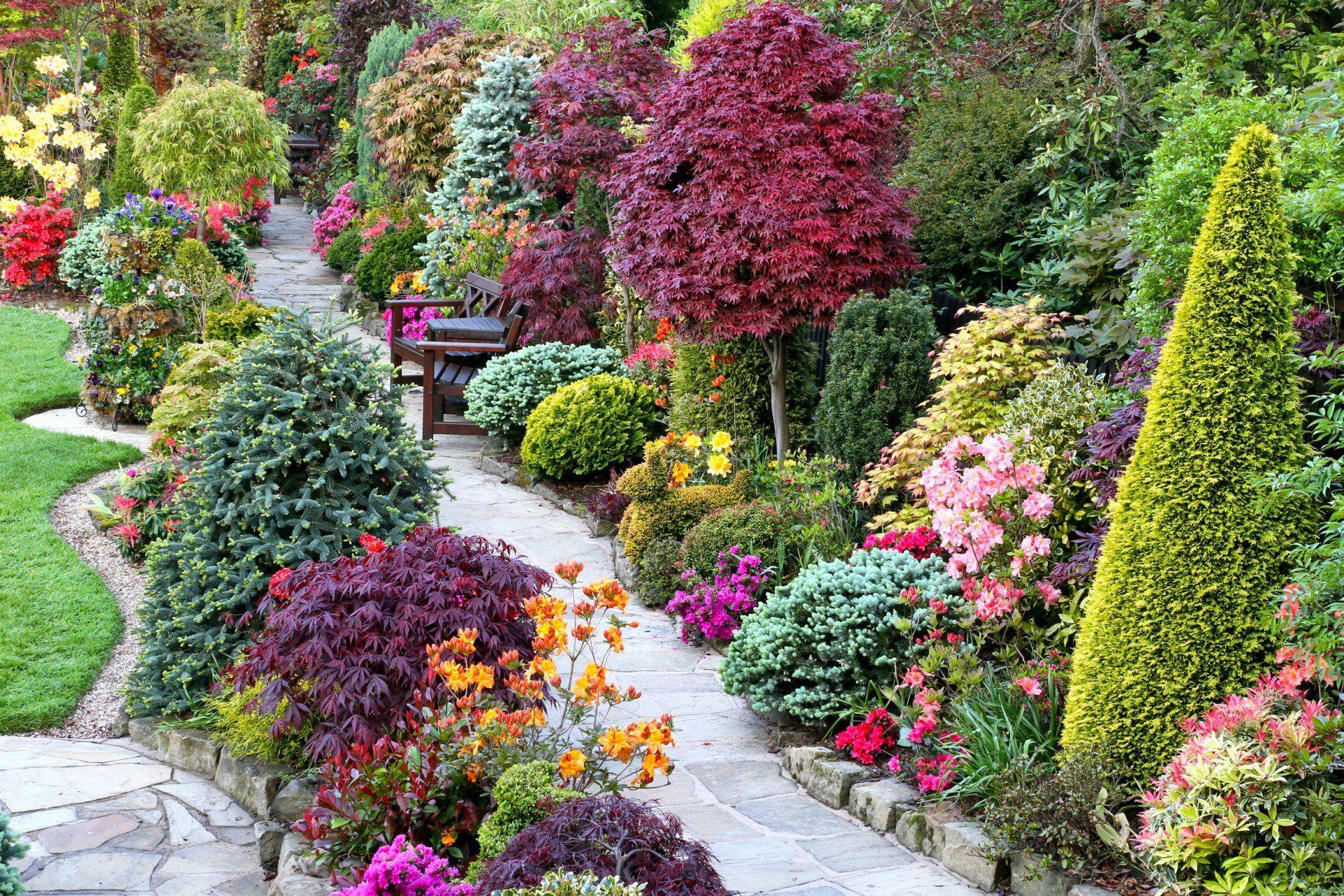 кустарники для сада фото