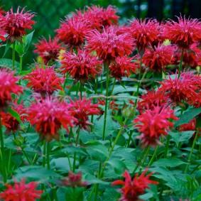 многолетние растения для сада дизайн идеи