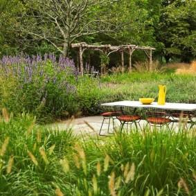 многолетние растения для сада декор фото