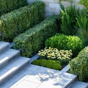 многолетние растения для сада фото декор