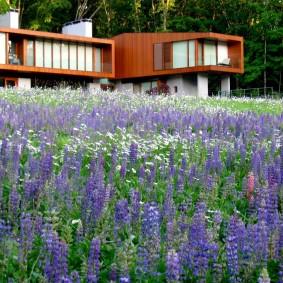 многолетние растения для сада фото декора