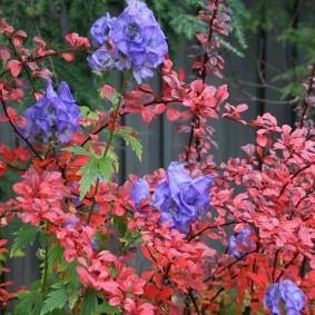 многолетние растения для сада декор идеи