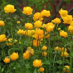 многолетние растения для сада фото оформления