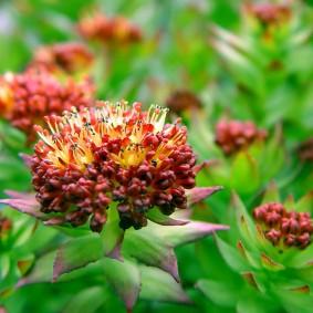 многолетние растения для сада варианты