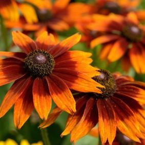 многолетние растения для сада фото вариантов