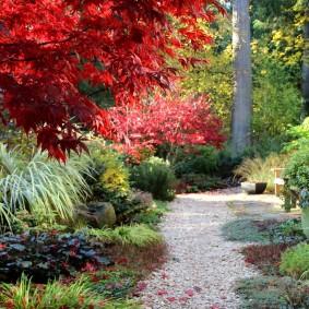 многолетние растения для сада виды
