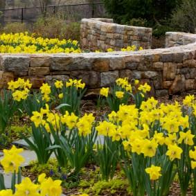 многолетние растения для сада виды фото