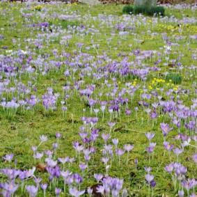 многолетние растения для сада фото виды