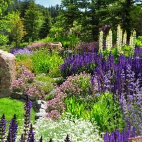 многолетние растения для сада фото видов