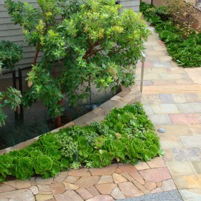 многолетние растения для сада виды идеи