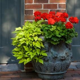 многолетние растения для сада идеи фото
