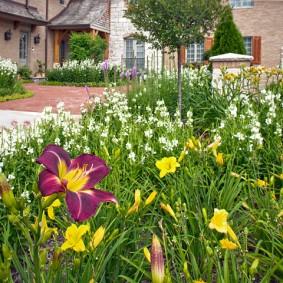 многолетние растения для сада обзор