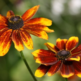 многолетние растения для сада виды оформления