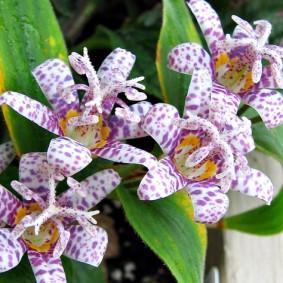 многолетние растения для сада варианты декора