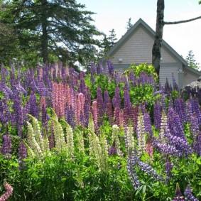 многолетние растения для сада варианты оформления