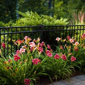 многолетние растения для сада дизайн