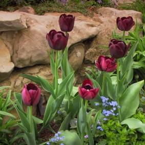 многолетние растения для сада дизайн фото