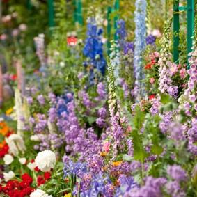 многолетние растения для сада фото дизайн
