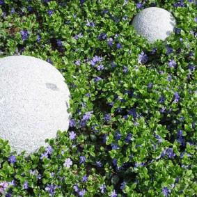 многолетние растения для сада фото дизайна