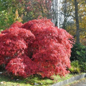 многолетние тенелюбивые растения для сада декор