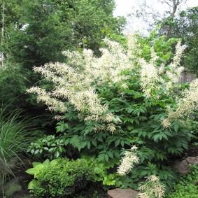 многолетние тенелюбивые растения для сада декор фото
