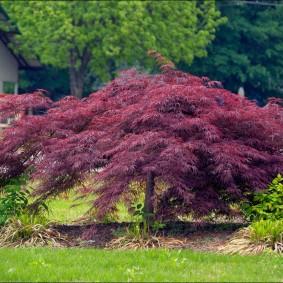 многолетние тенелюбивые растения для сада фото декор