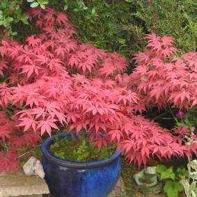 многолетние тенелюбивые растения для сада фото декора