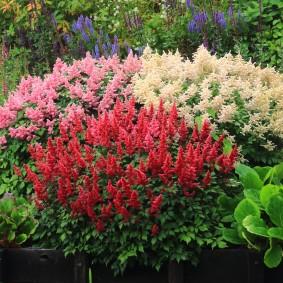 многолетние тенелюбивые растения для сада декор идеи