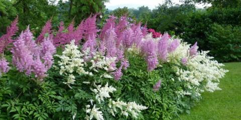 многолетние тенелюбивые растения для сада идеи декор