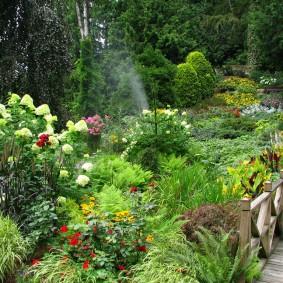 многолетние тенелюбивые растения для сада идеи декора
