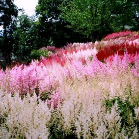 многолетние тенелюбивые растения для сада оформление