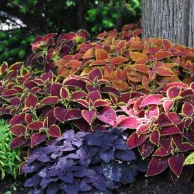 многолетние тенелюбивые растения для сада оформление фото