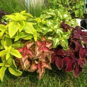 многолетние тенелюбивые растения для сада фото оформление