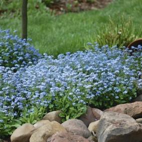 многолетние тенелюбивые растения для сада фото оформления