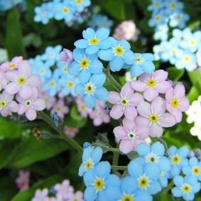 многолетние тенелюбивые растения для сада оформление идеи