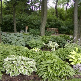 многолетние тенелюбивые растения для сада идеи оформление