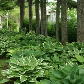 многолетние тенелюбивые растения для сада идеи оформления