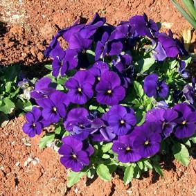 многолетние тенелюбивые растения для сада варианты фото