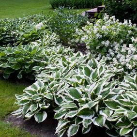 многолетние тенелюбивые растения для сада фото варианты
