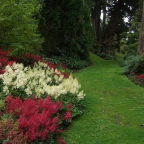 многолетние тенелюбивые растения для сада идеи фото
