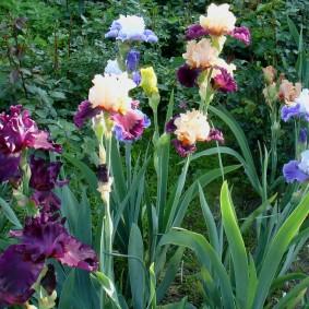 многолетние тенелюбивые растения для сада варианты идеи