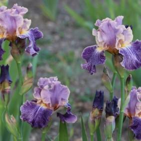 многолетние тенелюбивые растения для сада идеи варианты