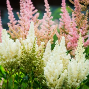 многолетние тенелюбивые растения для сада идеи вариантов