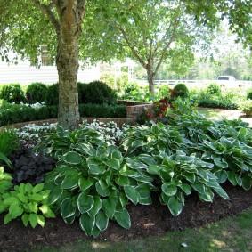 многолетние тенелюбивые растения для сада виды фото