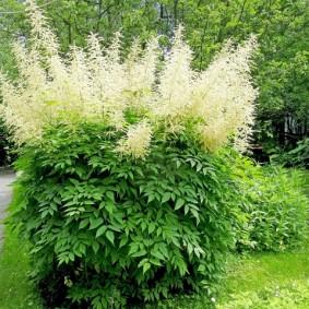многолетние тенелюбивые растения для сада фото виды