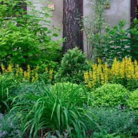 многолетние тенелюбивые растения для сада виды идеи